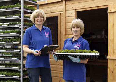 Available Now Earley Ornamentals