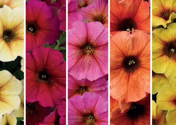 Home Page Banner Earley Ornamentals