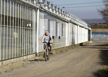 Mike SIte Earley Ornamentals
