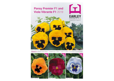 Pansy and Viola Earley Product Information